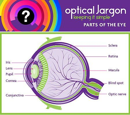 Parts of the eye abdo parts of the eye jargon buster also see optical jargon blind spotopen ccuart Images